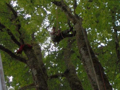 arbre elagueur