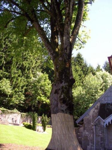 arbre proche gauche apres