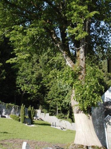 arbre proche gauche avant