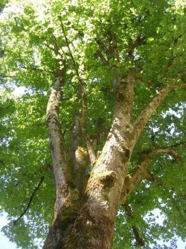 arbres gauche apres0