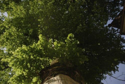 arbres gauche avant