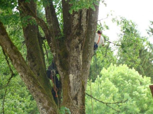 elageurs arbre2